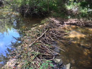 Beaver dam on mine run