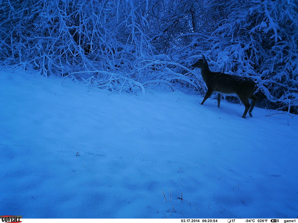 Deer on a cold morning