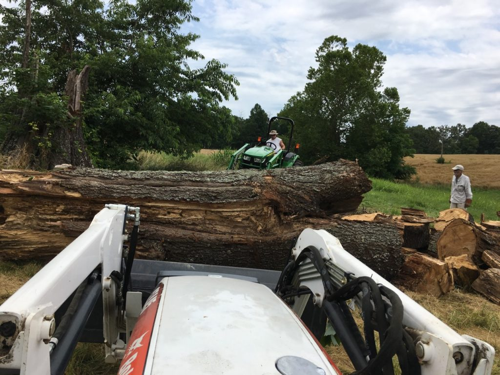 Double teaming the monster red oak