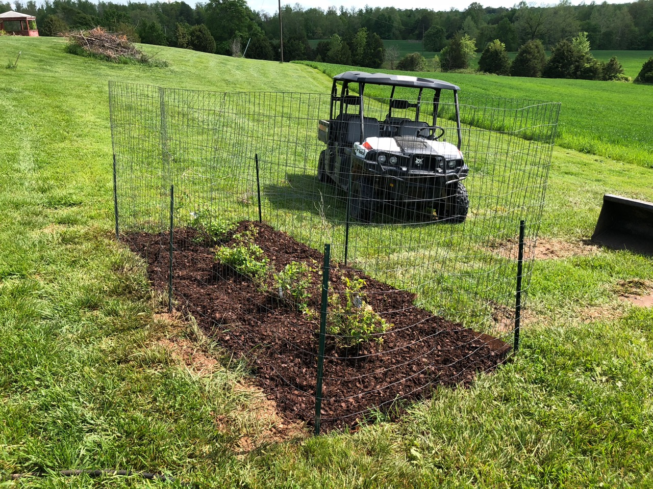Planted a Row of Blueberry Bushes | Springfield Farm